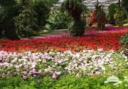 世界花卉大观园第十一届踏青赏花节