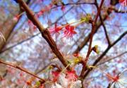 春色满园关不住 京郊清明赏花好去处