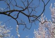花丛深处觅清明 与花季北京亲密接触