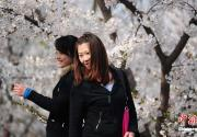 高清:北京玉渊潭公园踏青赏樱季到来