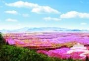 平谷22万亩桃花盛开 成为世界奇观