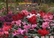 京郊踏青雾灵山庄 找寻北京最美的春天