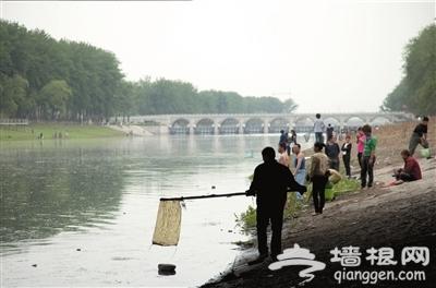 潮白河 水涨闸开游鱼遭灾[墙根网]