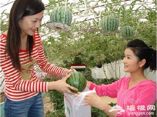 第23北京大兴西瓜节 品味京南美景