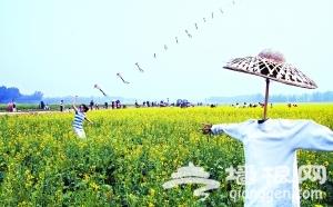 长沟镇看油菜花:京郊消夏旅游新辟农田休闲观光