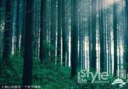 6月炎热周末 去北京5大森林找凉快