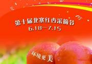 平谷北寨红杏 将迎来第十届北寨红杏采摘节