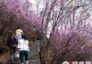 春光灿烂花盛开 野三坡白草畔游记
