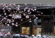 春天开在水峪村