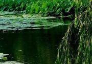 红衣翠扇映清波 北海公园赏荷攻略
