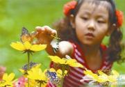 景山公园彩蝶展 美丽风景中与蝶共舞