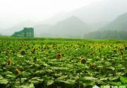雾灵西峰彩葵园