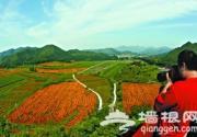 延庆四季花海沟域8200亩花卉绽放