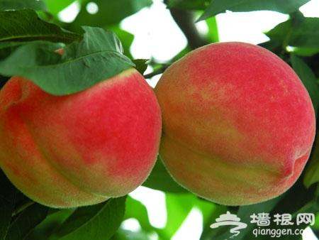 挂甲峪民俗村:住原始生态小木屋