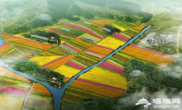 京郊农田变花园 延庆四季花海近万亩花卉绽放