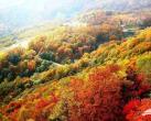 一览秋日美 京郊爬山赏红叶6大好去处
