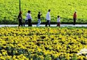 菊花文化节 亮相鲜花港