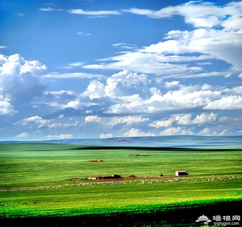 驰骋北京最近湿地草原 沽源自驾一日游[墙根网]