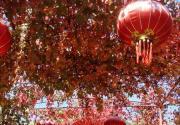 北京圣泉山第四届红叶旅游文化节即将拉开帷幕