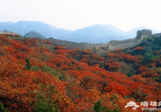 八达岭国家森林公园第五届生态文化节开幕