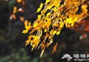 """香山新开赏红山路 十月中旬可观看""""红叶初现"""""""