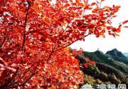 自驾游京郊 追赶秋天的脚步