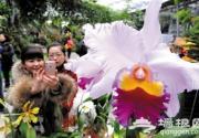 新年植物园寻龙花