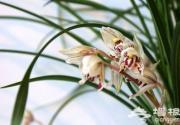 北京五大精品花卉展嗅春之气息