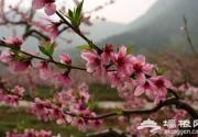 花丛深处觅清明 北京周边踏青赏花去