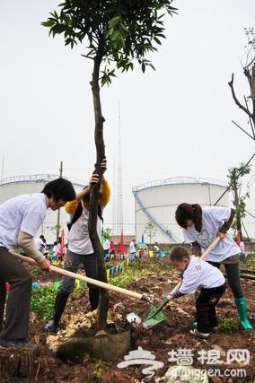 2012植树节 京郊植树全攻略