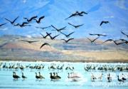 密云水库 鸟的天堂