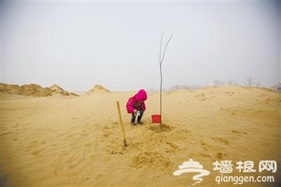 距京最近沙漠-天漠13年变绿洲