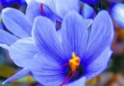 北京植物园春季赏花游
