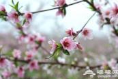 2020平谷桃花节