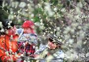 北京植物园第24届桃花节开门迎客