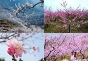 桃花开了 2012年平谷桃花节赏花线路推荐