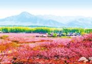 2012平谷桃花节即将开幕
