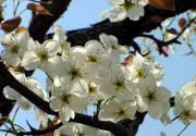 京津周边自驾赏玩四种花