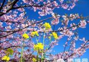 人间四月天 北京赏花攻略