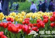 中山公园举办郁金香花展 设观花导览图