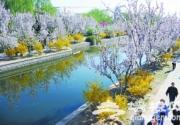 元大都城垣遗址公园:海棠香自有 寻芳在花溪