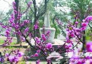 红螺寺景区赏花计
