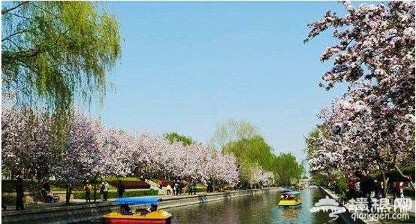 北京元大都遗址公园赏海棠花