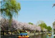 北京元大都遺址公園賞海棠花