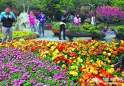 五一香山香文化节呈现七彩美景