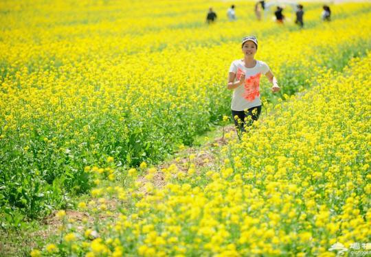 北京有片油菜花(中天瀚海农业观光园 )