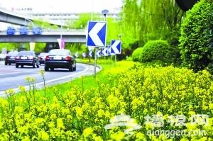 京城二环路旁盛开油菜花[墙根网]