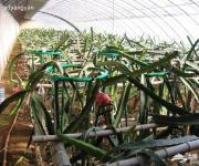 圣竹园热带水果采摘开心农场