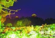夜逛景山赏牡丹