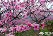 平谷京郊游 最佳旅游线路推荐